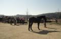 hodnoceni koni