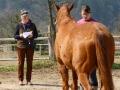 popisovani koni a